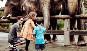 Sewa Mobil Di Bali - Bali Zoo Elphant & Kid