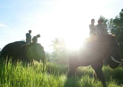 Sewa Mobil Di Bali - Bali Zoo Elphant Ride