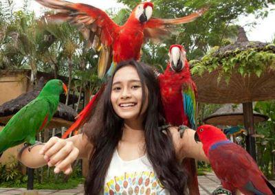 Monkey Forest Ubud Bali - Bali Bird Park