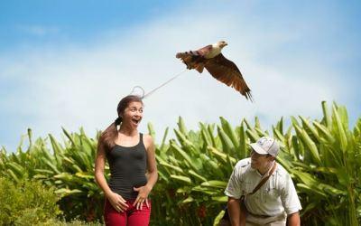 Bali Bird Park Taman Burung Untuk Wisata Rekreasi