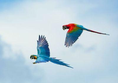 Bali Bird Park - Taman Burung di Bali 02