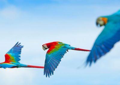Bali Bird Park - Taman Burung di Bali 05