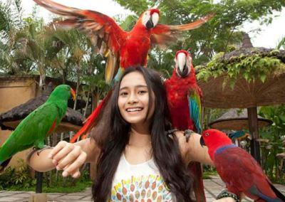 Bali Bird Park - Taman Burung di Bali 09