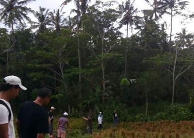 Trekking di Bali Dengan Jalur Sawah