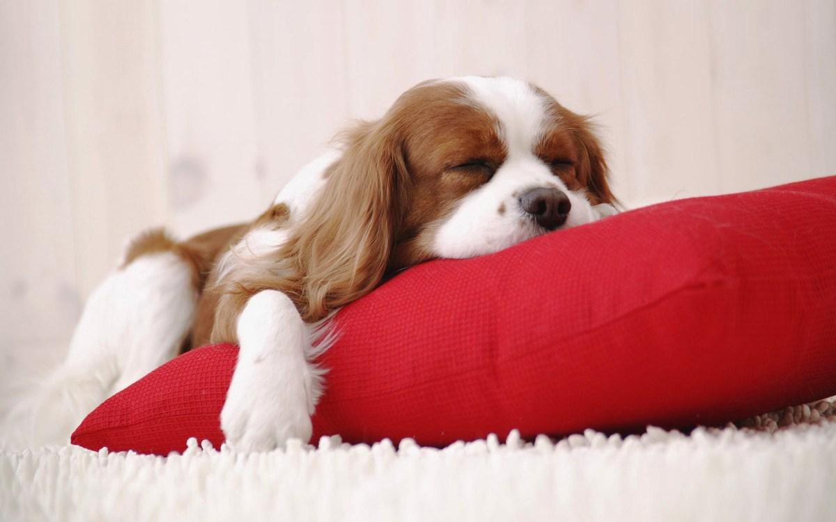 Doggie Leggings Pillowcase