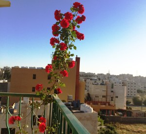 Here's a picture from my balcony in Madaba, Jordan. I hope to find some interesting textiles in the bazaars as I travel through the country.