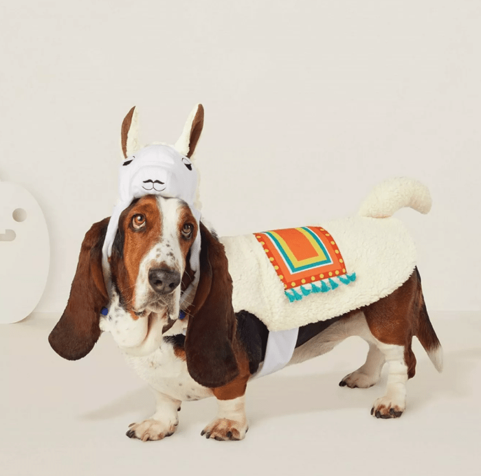 dog in llama costume