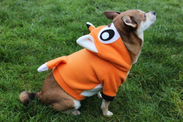 small dog in fleece fox hoodie