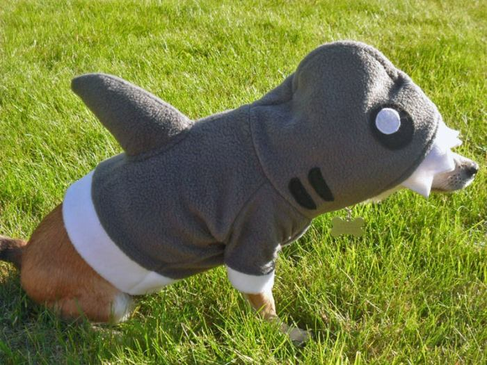 small dog in fleece shark hoodie costume