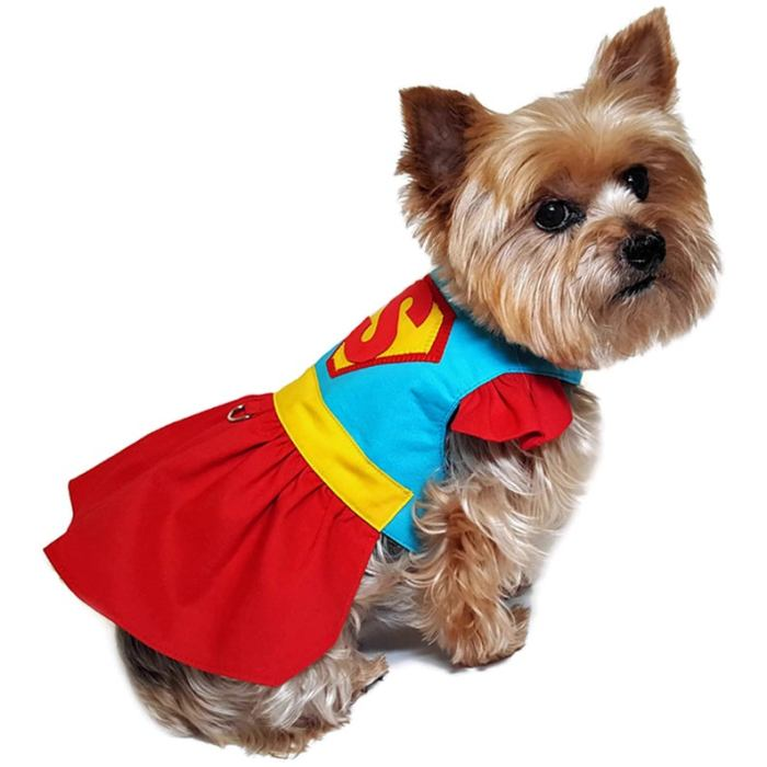 small dog with superman costume on