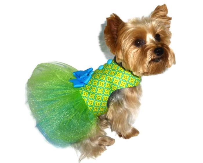 small dog in dress with tutu skirt