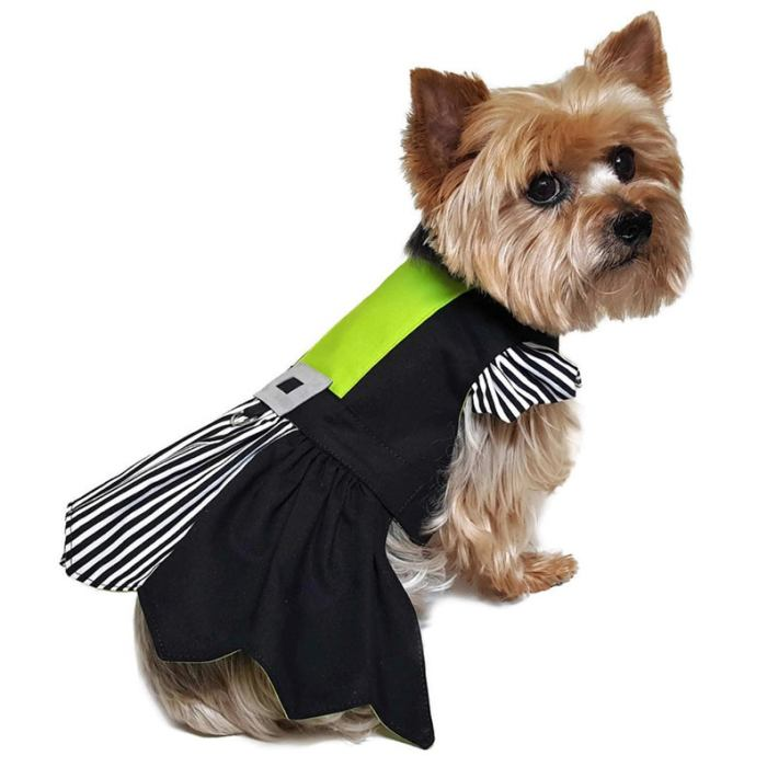 small dog with witch costume on