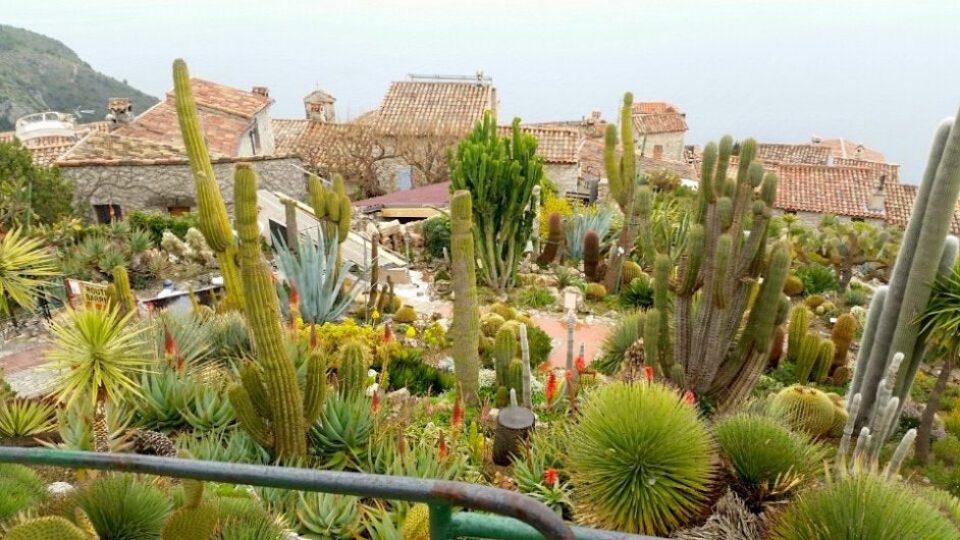 Botanik bahçede yüzlerce çeşit bitki türünü görebilirsiniz