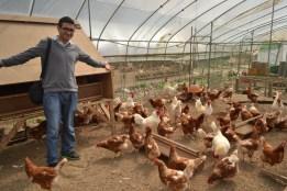 Tavuklarla Söyleşi