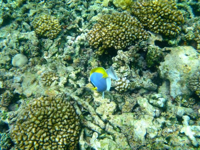 Boat Trips Seychelles Snorkelling Felicite island