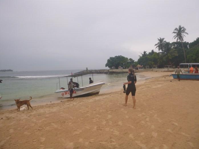 Unawatuna diving