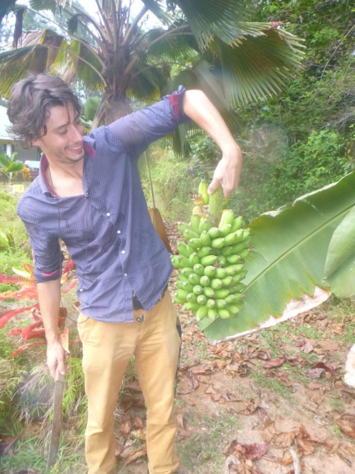 Our first crop of bananas