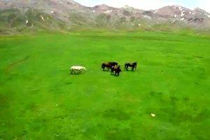 Küpe Çukuru'nda Yılkı Atları