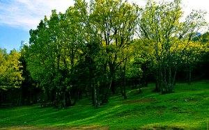 Kocakoru Ormanı Tabiat Parkı