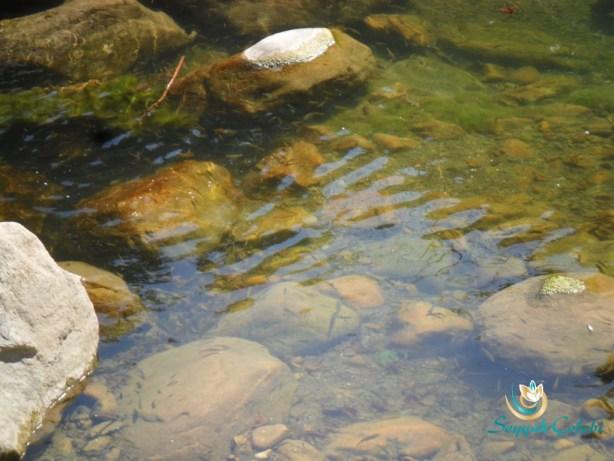 Misi Köyü Nilüfer Deresi Balıkları