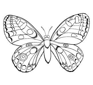 Omalovánky k vytisknutí: Zvířata: Hmyz, motýli