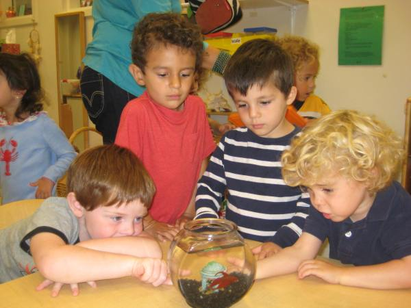 Steam In Preschool St Francis Of Assisi