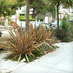 Sidewalk Landscaping