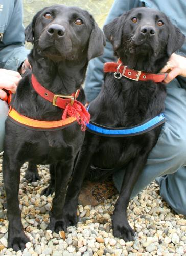 los dos perros