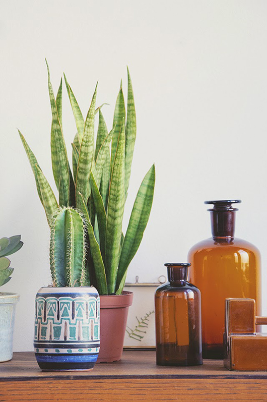 ceremic and glass jars with plants / sfgirlbybay