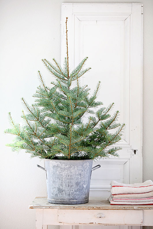 mini christmas tree in tin bucket with folded linens / sfgirlbybay