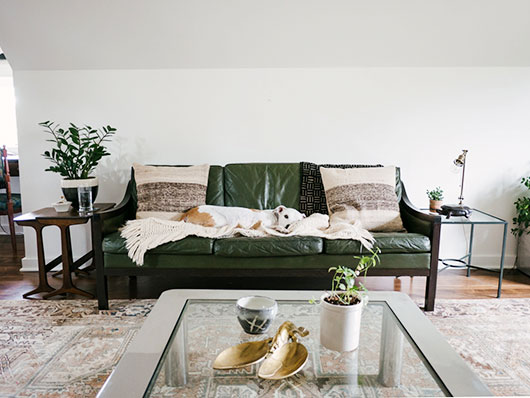 dog on green leather sofa / sfgirlbybay