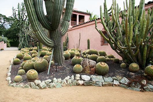 the cactus gardens at lotusland / sfgirlbybay
