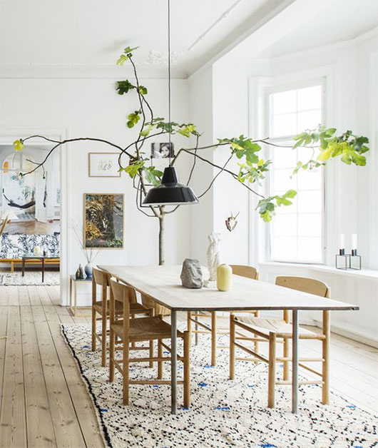 fiddle leaf fig tree over dining room table / sfgirlbybay