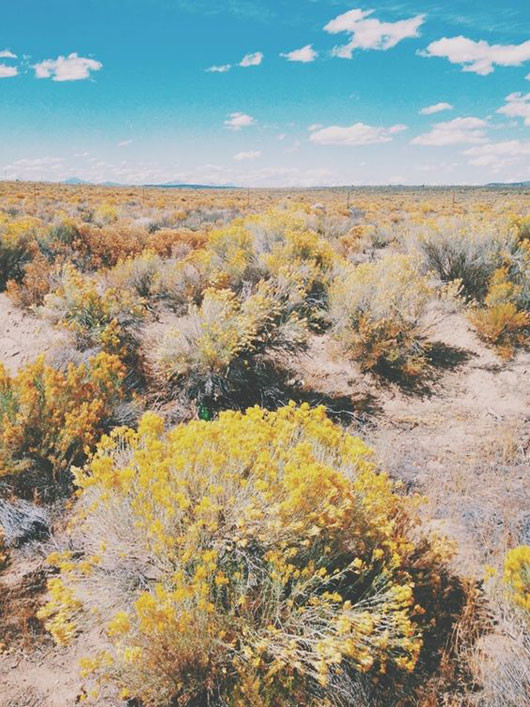 high desert plants in bloom / sfgirlbybay