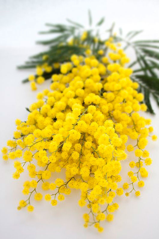 yellow floral blooms via mowielicious / sfgirlbybay