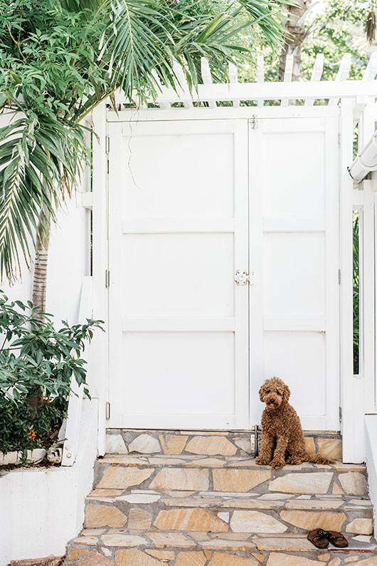 dog waits at villa palmier entry in st. barts / sfgirlbybay