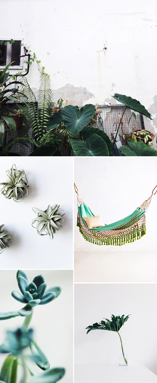 green home accessories and indoor plants / sfgirlbybay