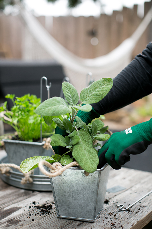 potted herb garden using hanging planters from target. / sfgirlbybay