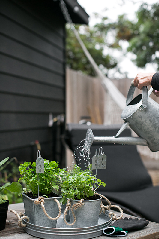 growing herbs in pots from target outdoors / sfgirlbybay