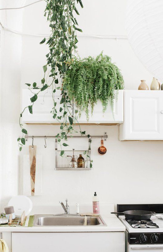 ferns hung and place on top of white kitchen cabinets with IKEA dish rack hung below / sfgirlbybay