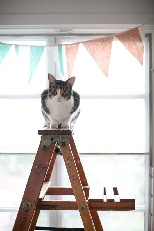 cat on a ladder inside Knotwork LA studio / sfgirlbybay