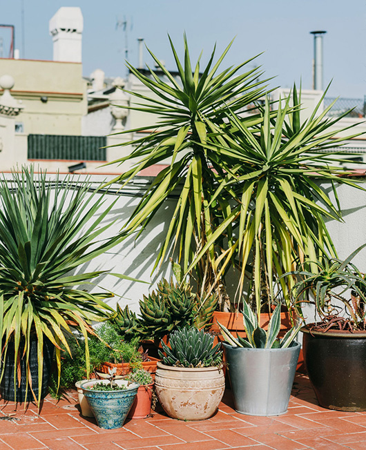 outdoor potted plants on modern patio / sfgirlbybay