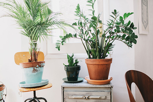 house plants in barcelona home / sfgirlbybay