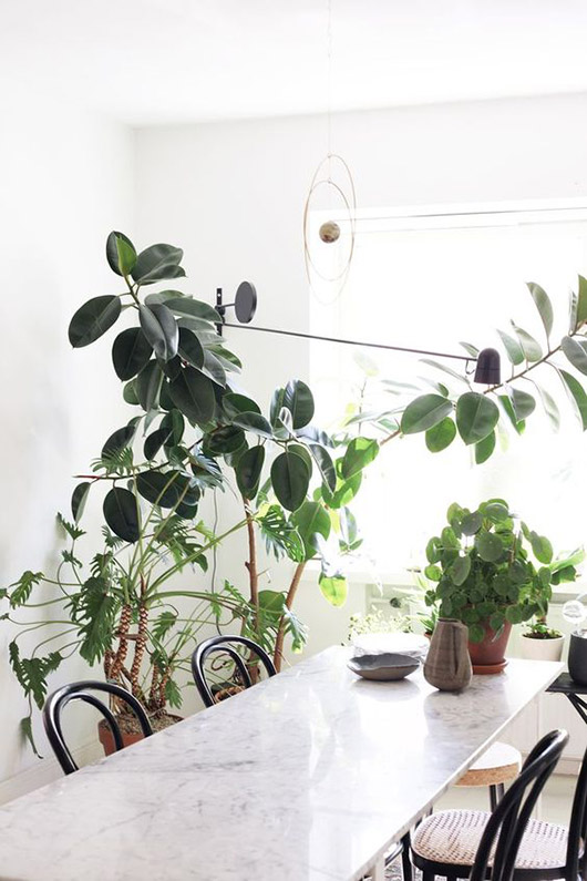 green plants in modern dining room / sfgirlbybay