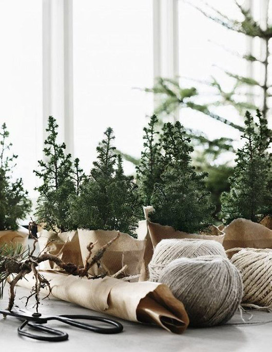mini-christmas trees in brown paper with twine. / sfgirlbybay