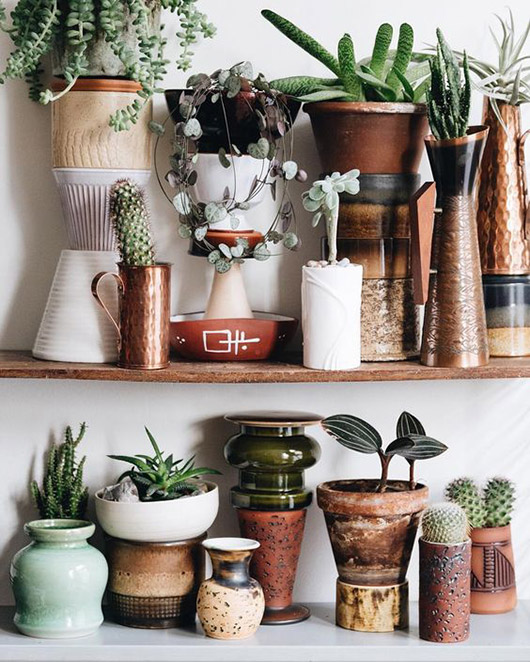 collection of pots and plants on wood shelves. / sfgirlbybay