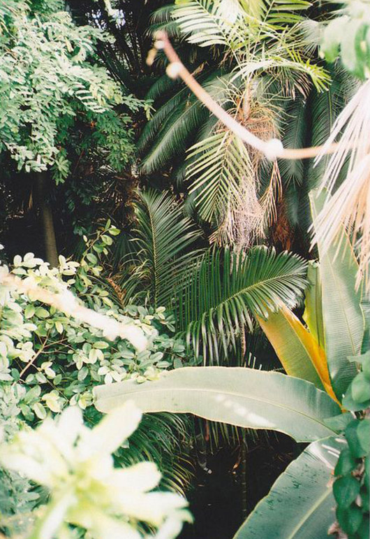 green plants. / sfgirlbybay