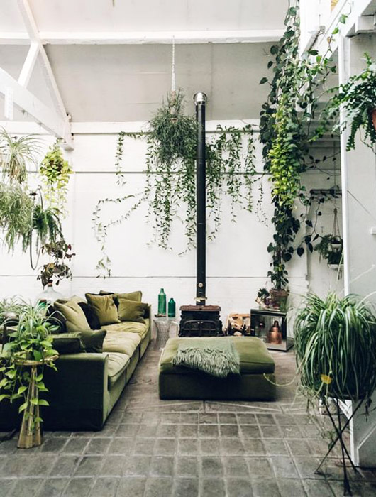 green houseplants and sofa. / sfgirlbybay