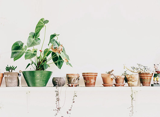 potted plants photographed on while shelf. / sfgirlbybay