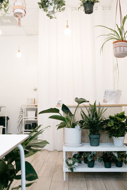 hanging and potted plants for sale at folia. / sfgirlbybay